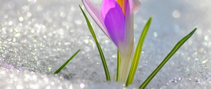 Предчувствие весны