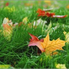 Зеленая листва спокойствия, на пороге скоро сентябрь